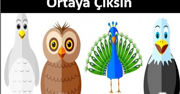 Seçilen Bir Kuş, Kişiliğinizle İlgili Gerçekleri Ortaya çıkarıyor