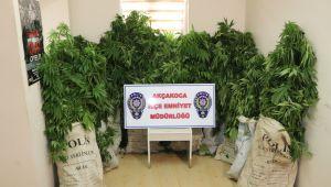Uyuşturucu Tarlasında Çalışırken Yakalandılar