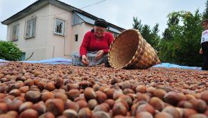 Avrupa'ya 9 ayda 8 bin 392 ton iç fındık ihraç edildi