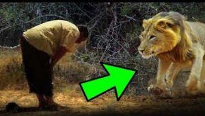 Aslan ile Namaz Kılan Adam!