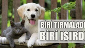 Düzce'de 45 Kişiyi Kedi Köpek Isırdı