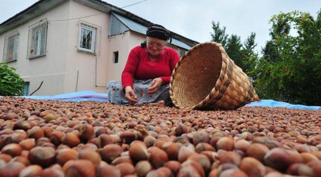 8 Bin 752 ton 82 kilo fındık ihraç edildi
