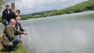 70 bin adet yavru sazan balığı bırakıldı