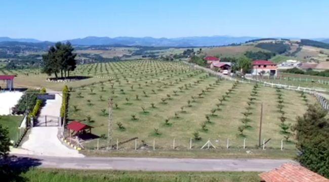 Fındık çiftliğinde üretim artıyor