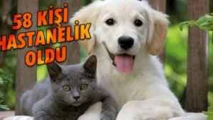Kedi köpek 58 kişiyi hastanelik etti