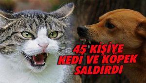 45 Kişiye Kedi ve Köpek Saldırdı